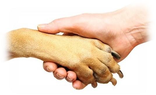 Hund_Mensch_Handinhand