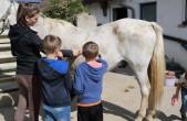 """Das Glück der Erde liegt auf dem Rücken der Pferde: """"Rund ums Pferd"""" beim Reit- und Fahrverein Hochwald e. V. (Foto: Stadt Rottweil)."""