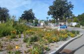 Ein im vergangenen Jahr neu gestalteten Grünzug blüht es bereits insektenfreundlich. Die Stadt Rottweil möchte damit einen Beitrag zum Erhalt der Artenvielfalt leisten (Foto: Stadt Rottweil).