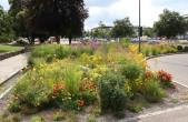 Die Stadt Rottweil hat die Grünanlagen am Nägelesgraben in den vergangenen Jahren naturnah umgestaltet. Am 1. Oktober gibt es bei einer Infoveranstaltung vor Ort nützliche Tipps für den eigenen Garten (Foto: Stadt Rottweil).