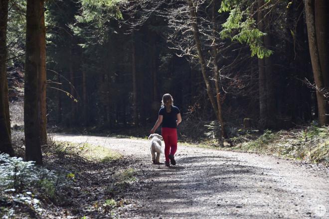 Kraftquelle Wald: in Corona-Zeiten beliebter denn je